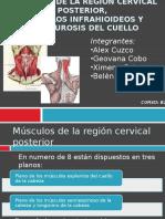 musculosdelaregioncervicalposterior-130213205903-phpapp02