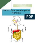 Lkpd Sistem Pencernaan