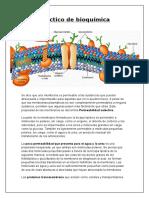 Practico de Bioquímica