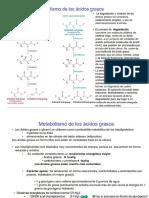 Metabolismo de Ac. Grasos