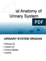 General Anatomy of Urinary System