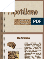 19 Hipotalamo