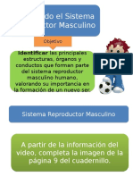 Clase-4-y-5-Sistema-reproductor-masculino.pptx