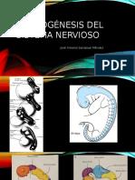 Morfogénesis Del Sistema Nervioso