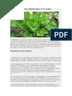 Plantas Medicinales El Llanten