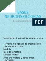 Bases Neurofisiológicas Cardinali