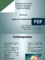 Cefalópodos - Paleontología