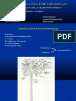 3-Farmacologia del neurone e sistema adrenergico.pdf