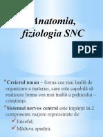 Anatomia, Fiziologia Sistemului Nervos Central