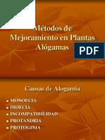 Maiz Alogamas