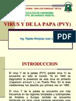 7 virus Y