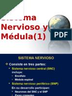 54_1_MEDULA_HB