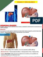 Clase 06 Hígado y Vías Biliares