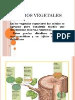 Tejidos Vegetales terminado.pptx