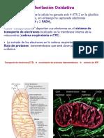 Clase 3 Fosforilacion Oxidativa 2s 2012 JMP