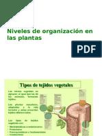 nivelesdeorganizacionenlasplantas.pptx