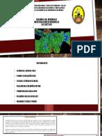 EXPO-DISEÑO DE PLANTAS-GRUPO I.pptx
