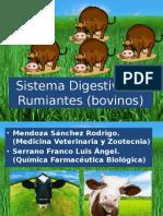 Sistema digestivo de Rumiantes