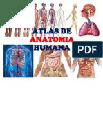 atlas dea natomia humana