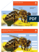 labelled diagram bee-a- 5-11 honey intro