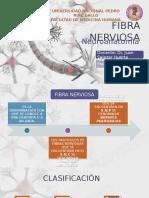 Fibra Nerviosa