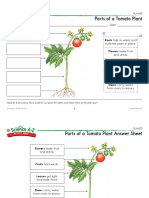 plantsk-2 plant parts activity sheet