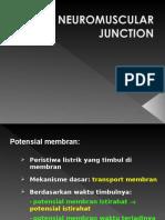 Kp 1.2.4.9 Neuromuscular Junction