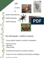 14.Arthropoda3.pdf