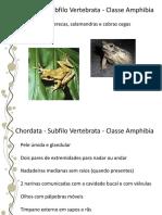 19.Anfíbios.pdf
