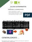 Patogénesis Neisseria Meningitidis SEMINARIO