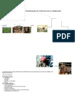 Usos de La Biodiversidad de Especies en La Orinoquía