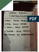 anatomi-urinaria-1