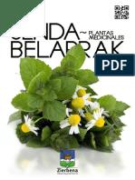 20121211_Plantas