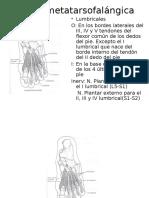 Flexión metatarsofalángica