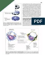 Livro Lehninger - Princípios de Bioquímica-3 edição- Completo-Parte3.pdf