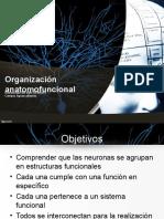 Organización anatomofuncional