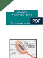 Celula_Eucariotica (Aula 4)