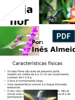 Beija flor - Ines Almeida.pptx