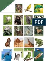 Animales Ingles
