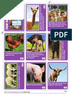 Animal Planet Animal Bites Fun Fact Cards
