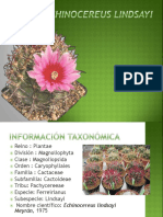 Echinocereus lindsayi