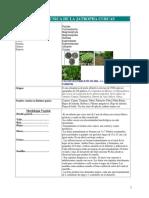 JATROPHA CURCAS.pdf