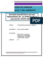 Pinus Ayacahuite para pulpa de papel