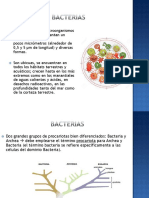 Clase Bacterias