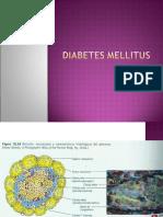 fisiopatología de la diabetes mellitus