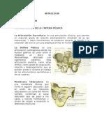 Artrologia MS y MI