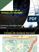 Neuro Biolog i A