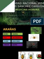 Aracnidos y Otros Artrópodos Ponzoñosos Azr