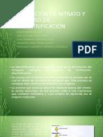 Reducción de Nitrato y Proceso de Desnitrificación
