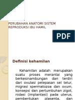 Perubahan Anatomi Sistem Reproduksi Ibu Hamil